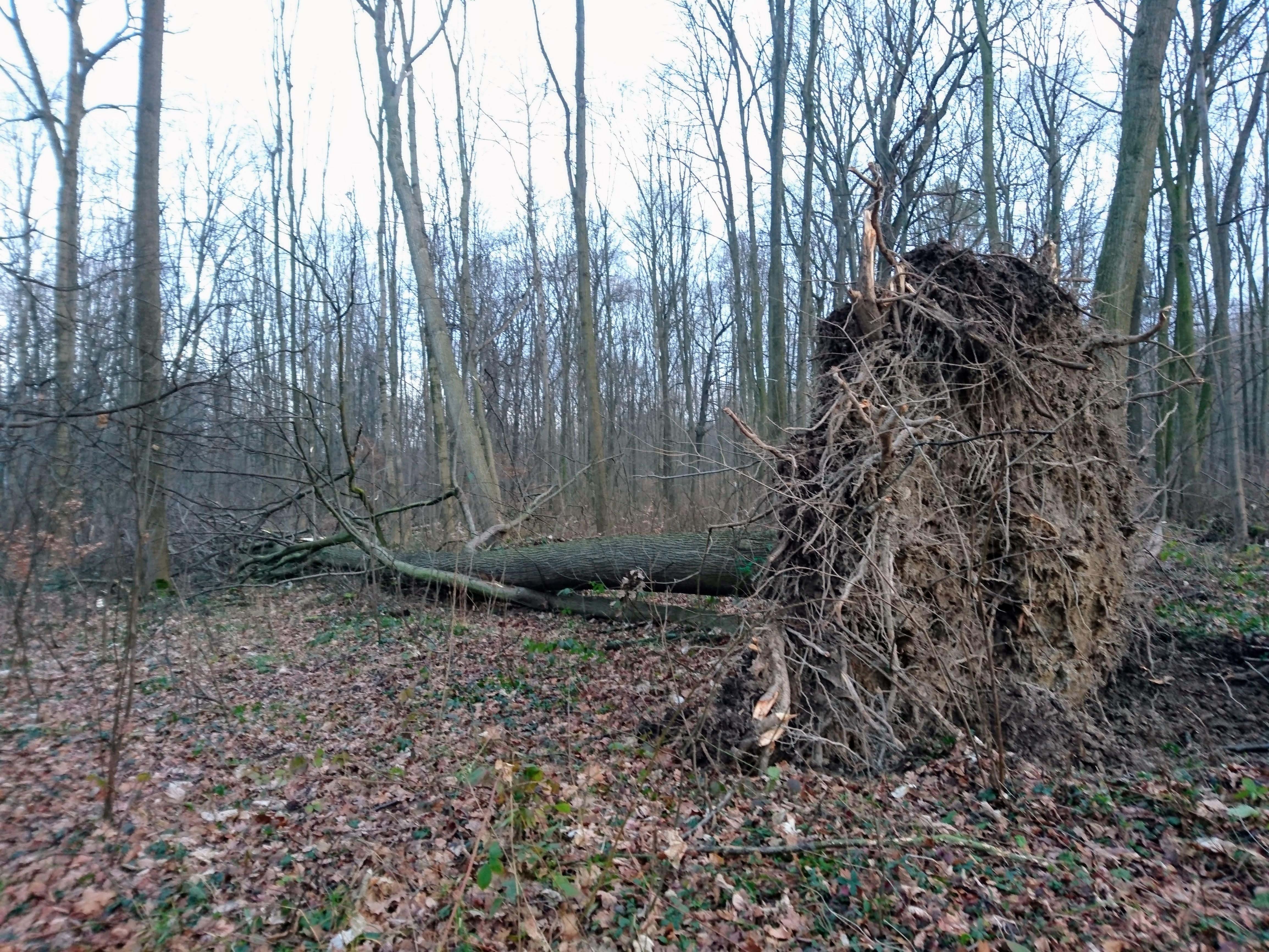 Sturmschäden im Geopark