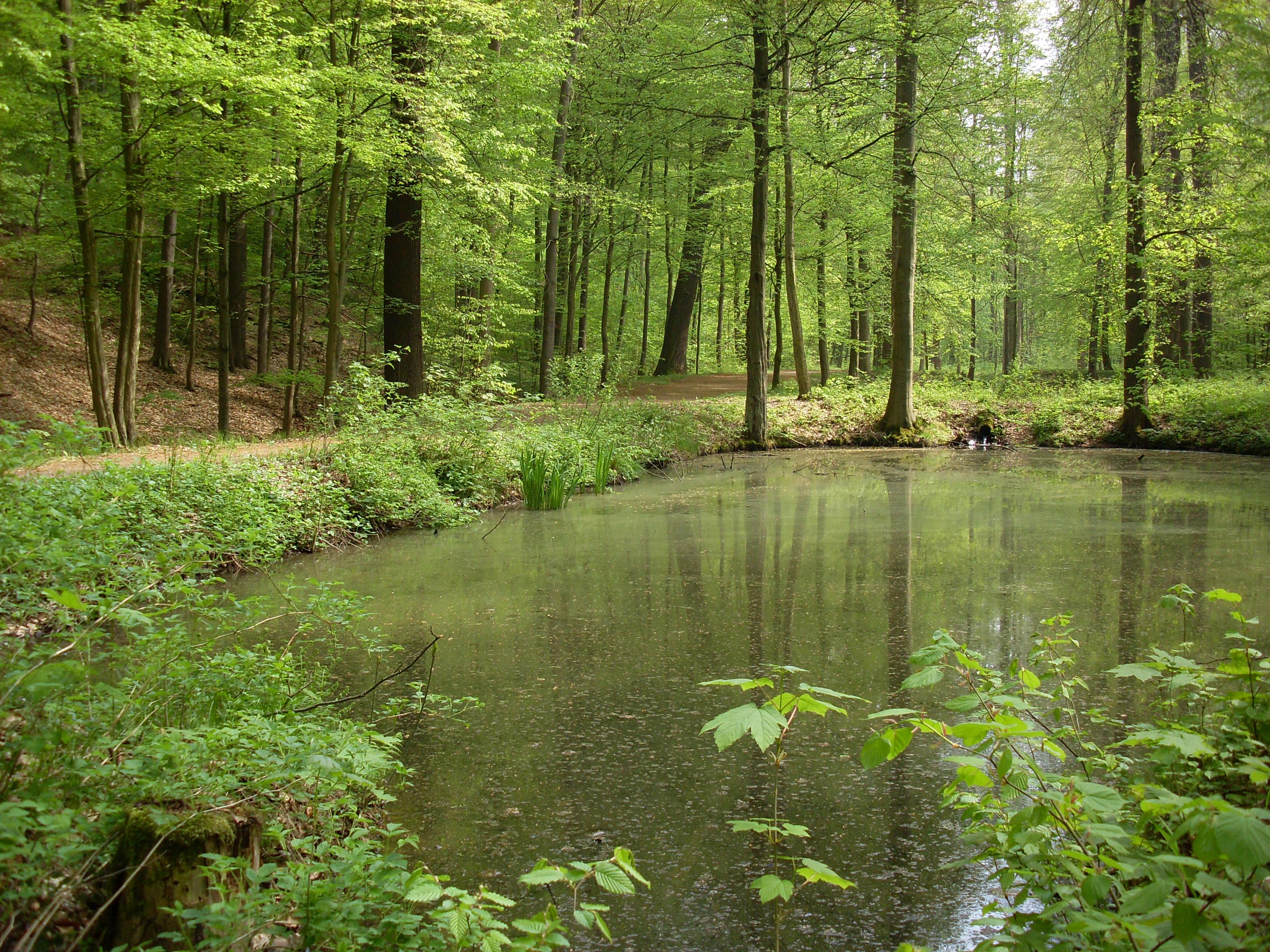 Blick in den Colditzer Tiergarten auf einen Waldtümpel