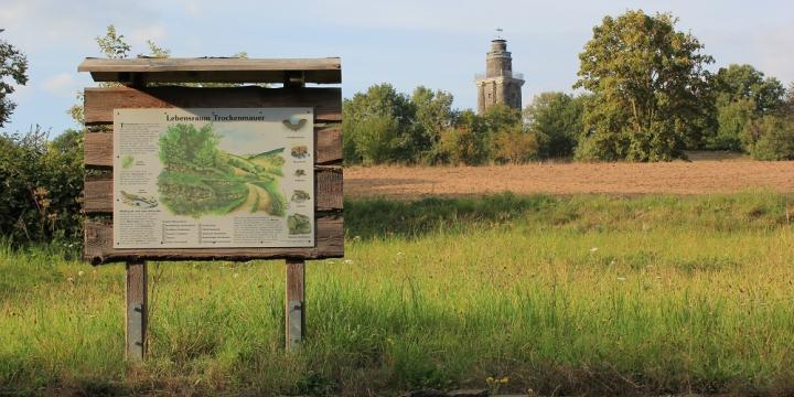 Blick von einer Infotafel zum Bismarckturm von Wurzen auf dem Wachtelberg
