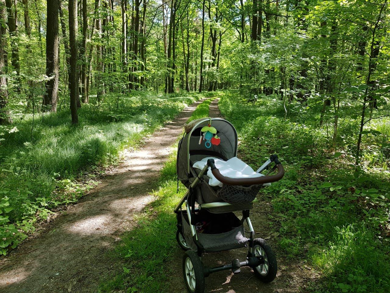 Kinderwagen im Wermsdorfer Wald, c) V. Wenzel