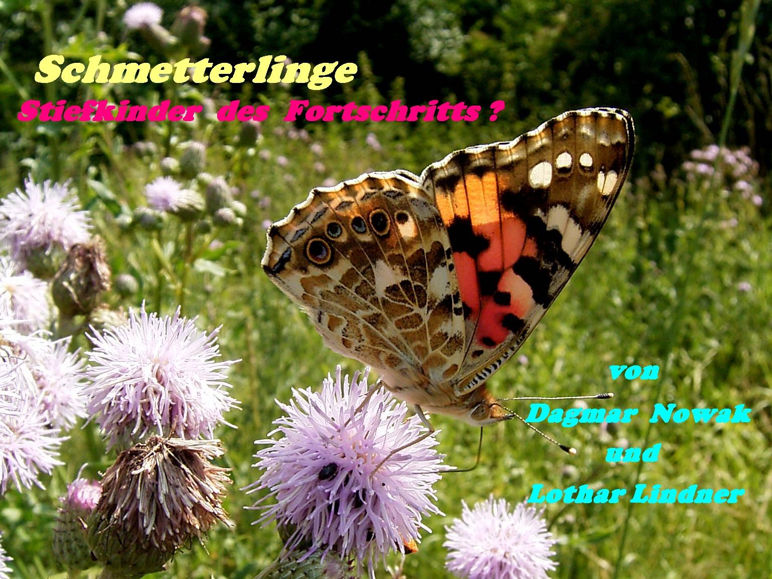 Bild zum Vortrag Schmetterlinge