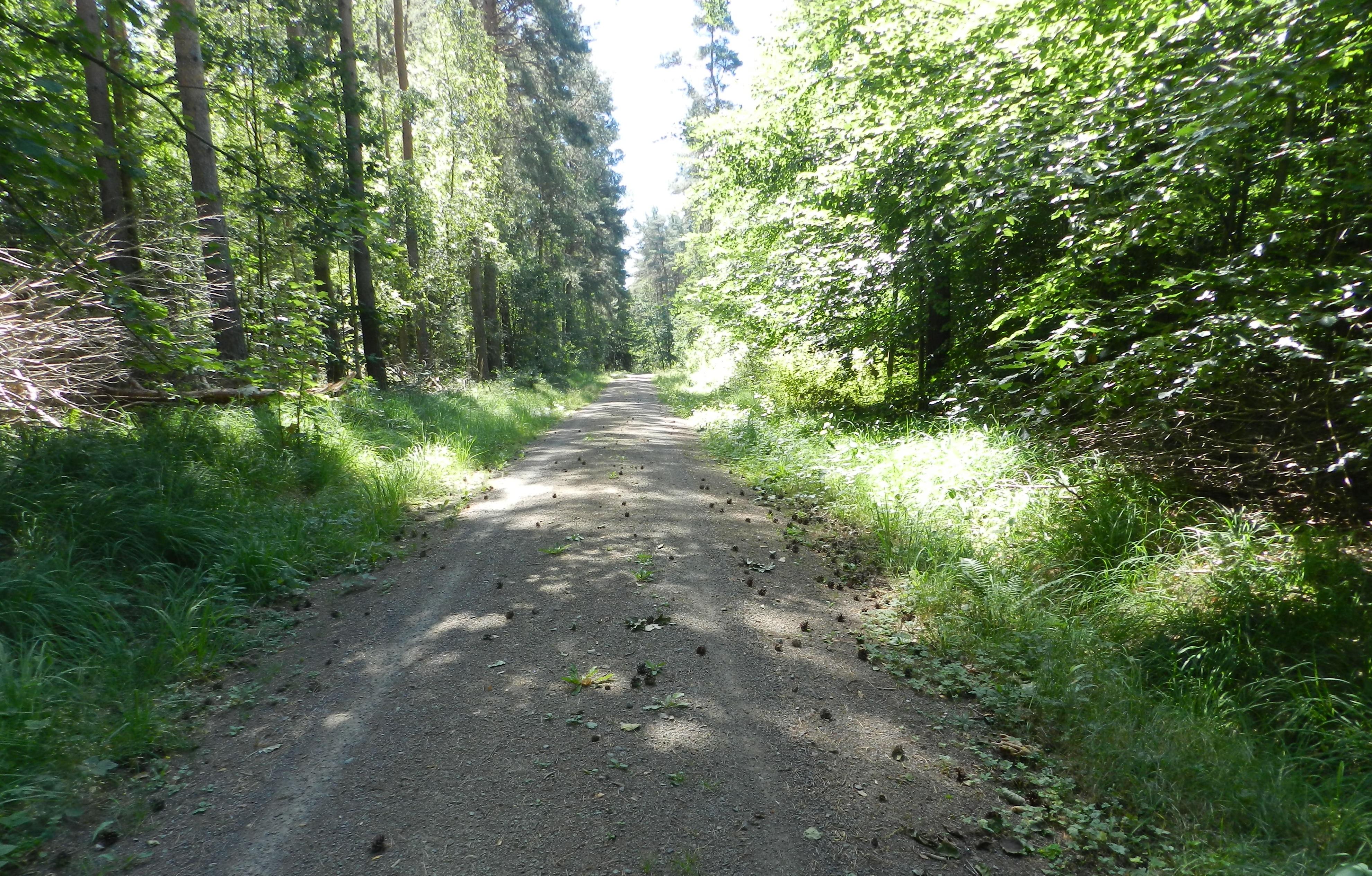 Blick in den Thümmlitzwald, Foto: Lothar Andrä