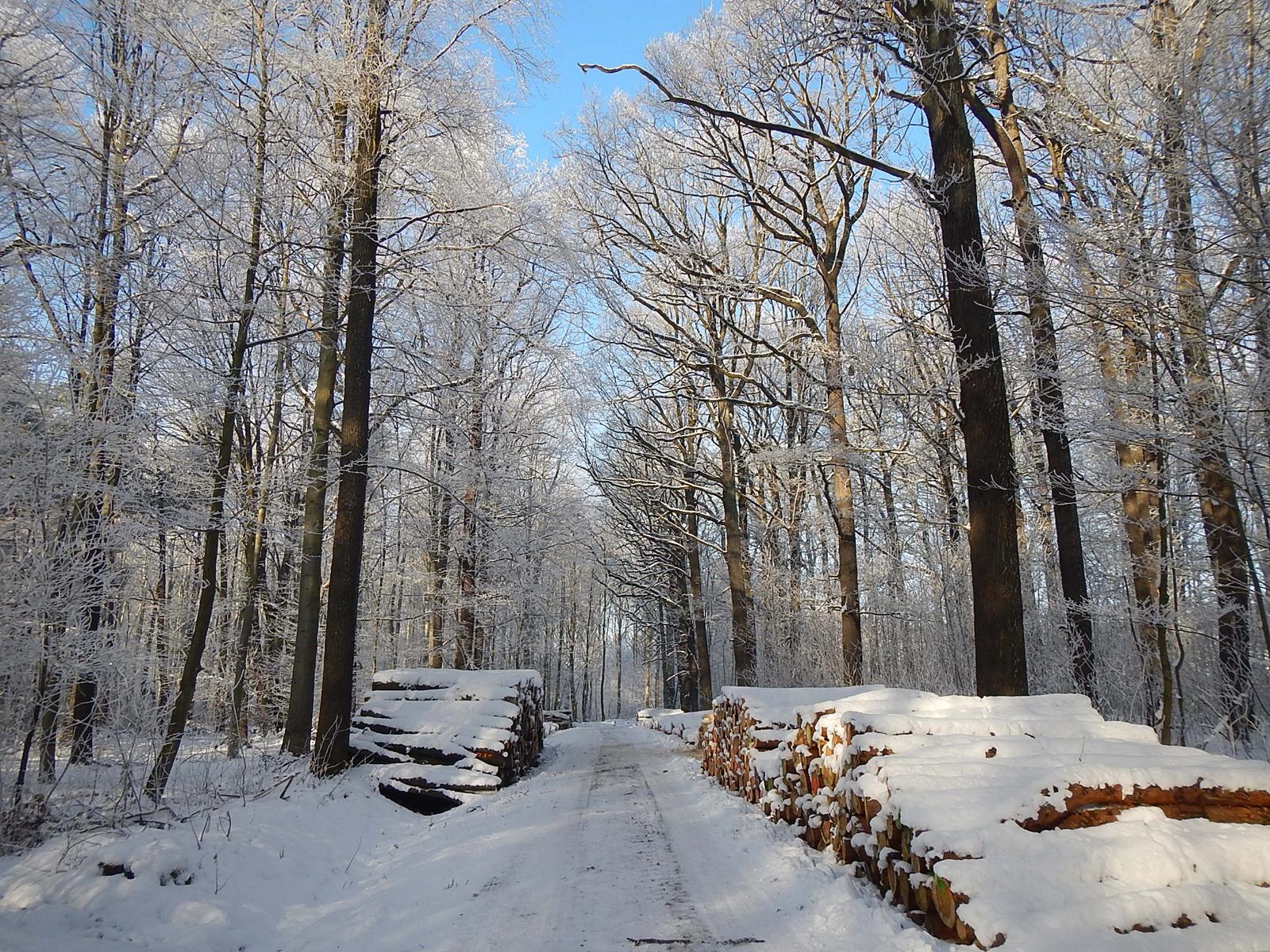 Wermsdorfer Wald, Foto: Uwe Lange