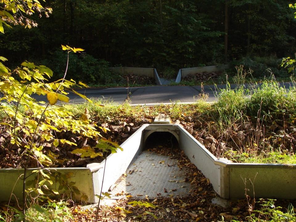 Amphibienschutzanlage, Foto: NABU